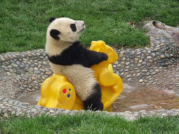 oso panda jugando con juguete de niño