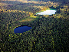Lietuva: miško akys