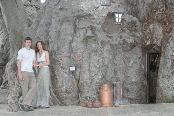 baobob tree south africa