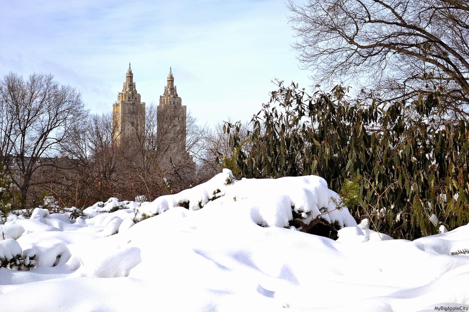 juno-2015-NYC-Blizzard-central-park-winter