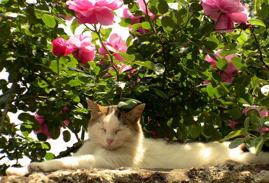 Bagnoregio cat