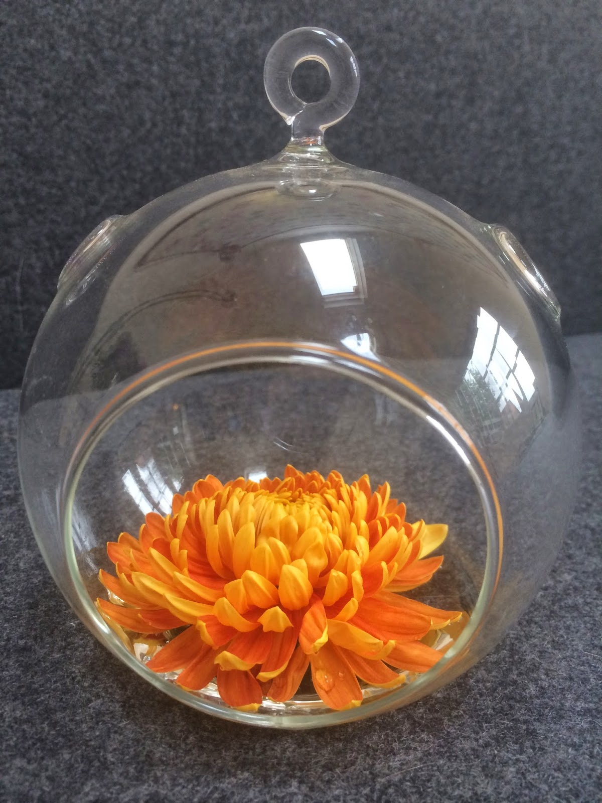 orange chyrsanthemum in a glass globe