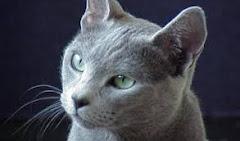 Un gato ruso ...