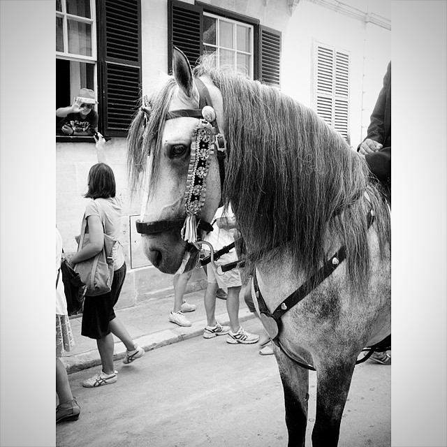 El caballo, protagonista de les Festes de Gràcia de Maó
