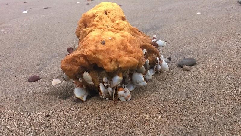 Dead Crustaceans On Konkan's Beaches