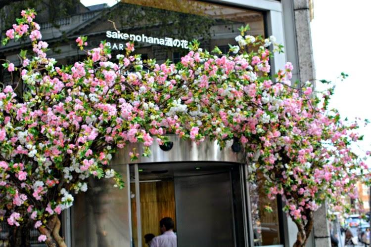 Sakura at Sake no Hana Japanese Cherry Blossom
