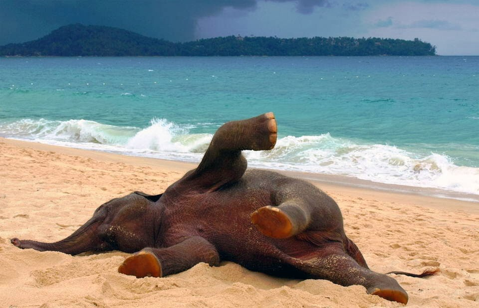Funny animals of the week - 7 March 2014 (40 pics), baby elephant playing on the beach