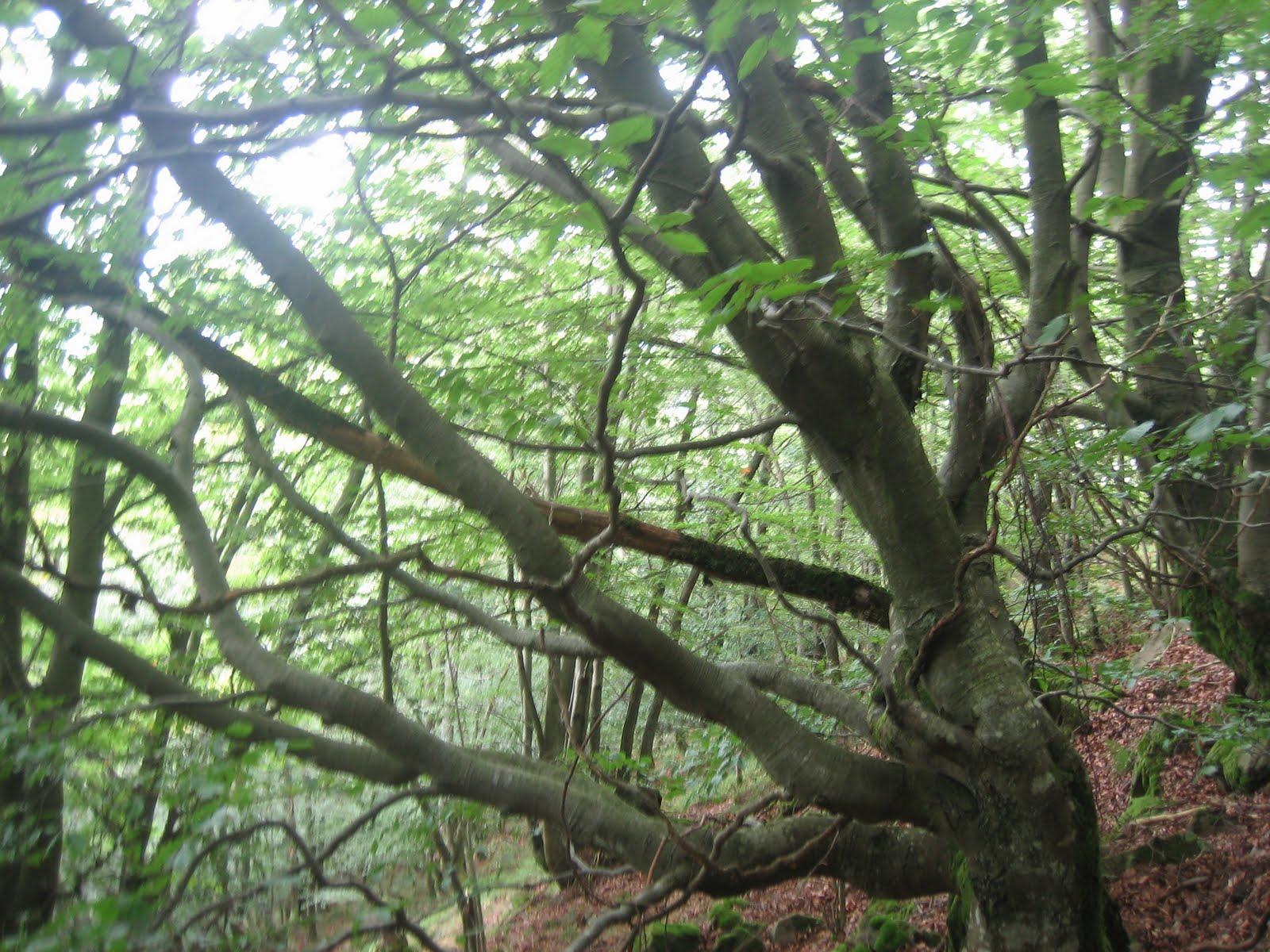 Bosque en Parque de Redes