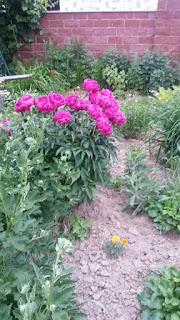 дача, цветы