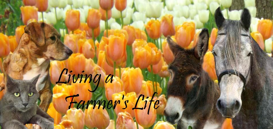 Living A Farmer's Life