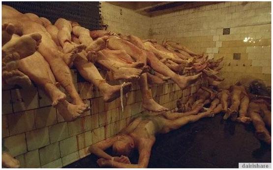 18SG Inilah Kilang Yang Memproses Organ Manusia Yang Sangat Mengerikan Dan Menjijikkan