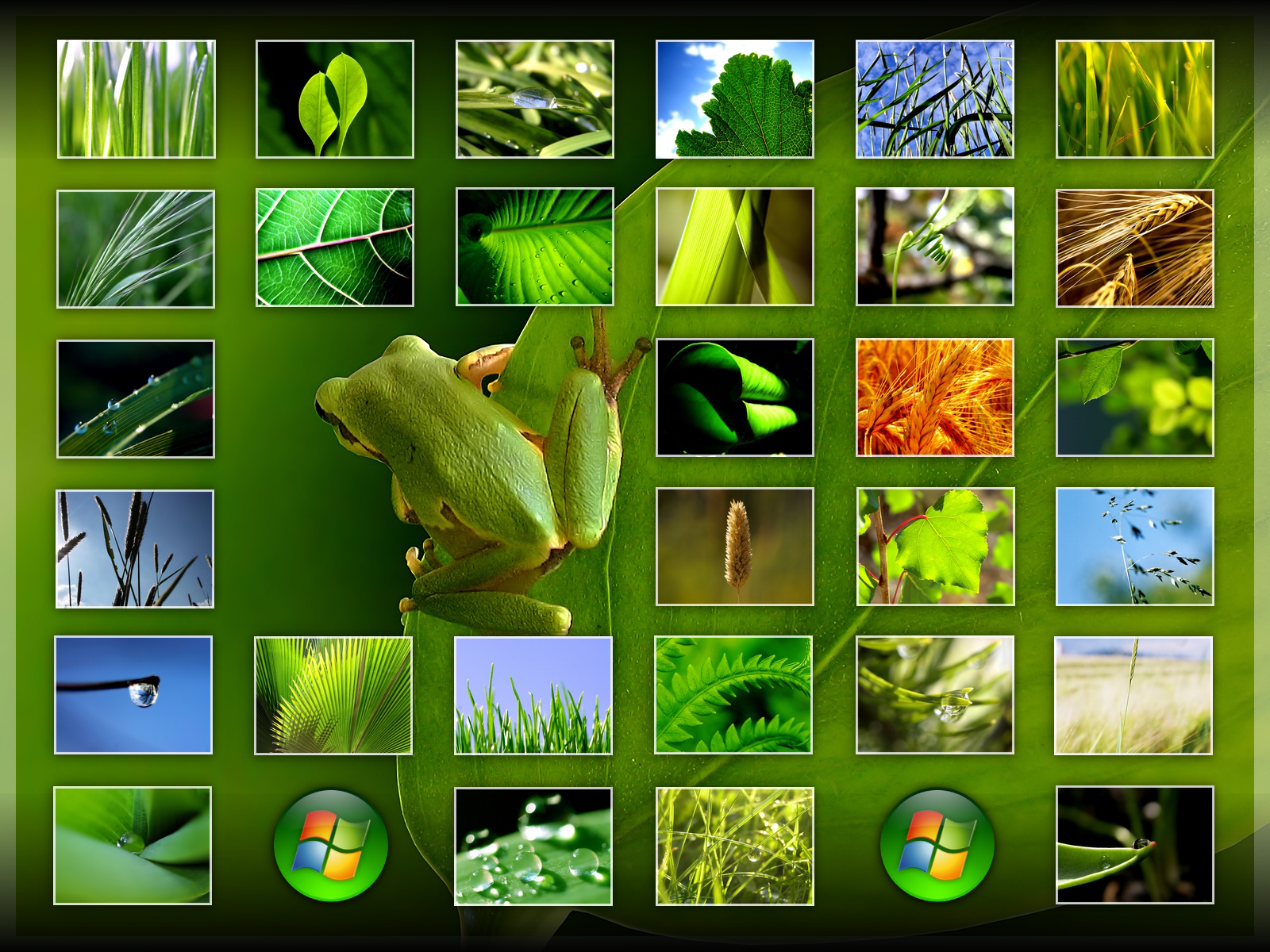 Vplants Nature Wallpaper Pack