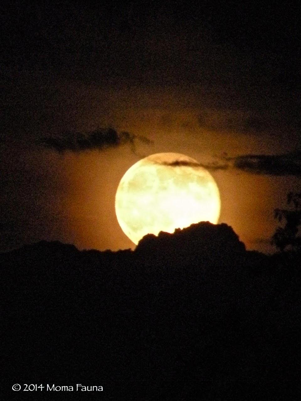 Buck Moon Rising 2
