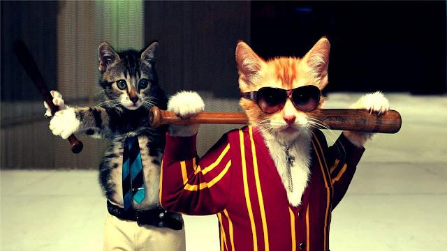 قطط مضحكون يلعبون البيسبول