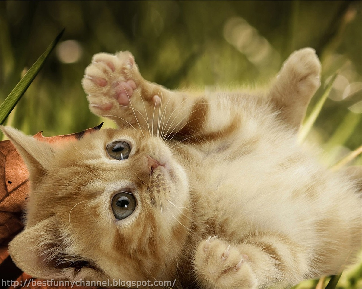 Cute And Funny Pictures Of Animals 38