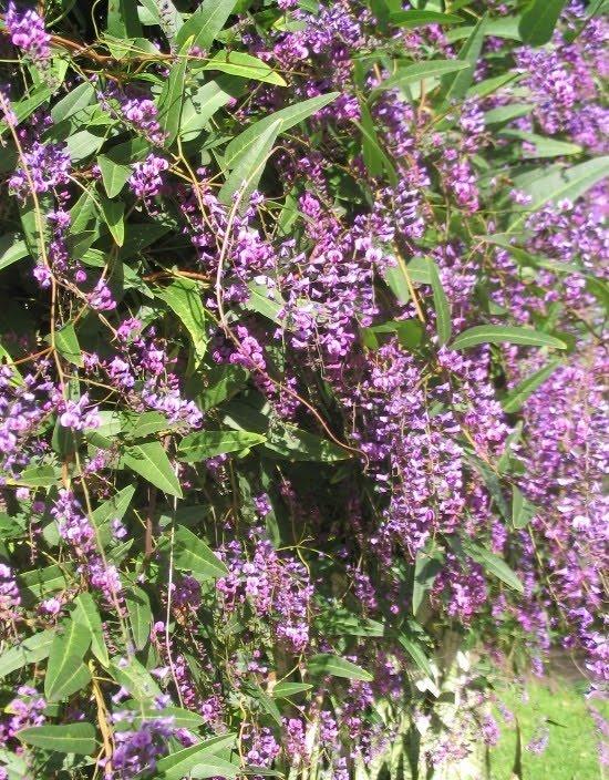 Wedding flowers spring wedding flowers australia spring wedding flowers australia mightylinksfo