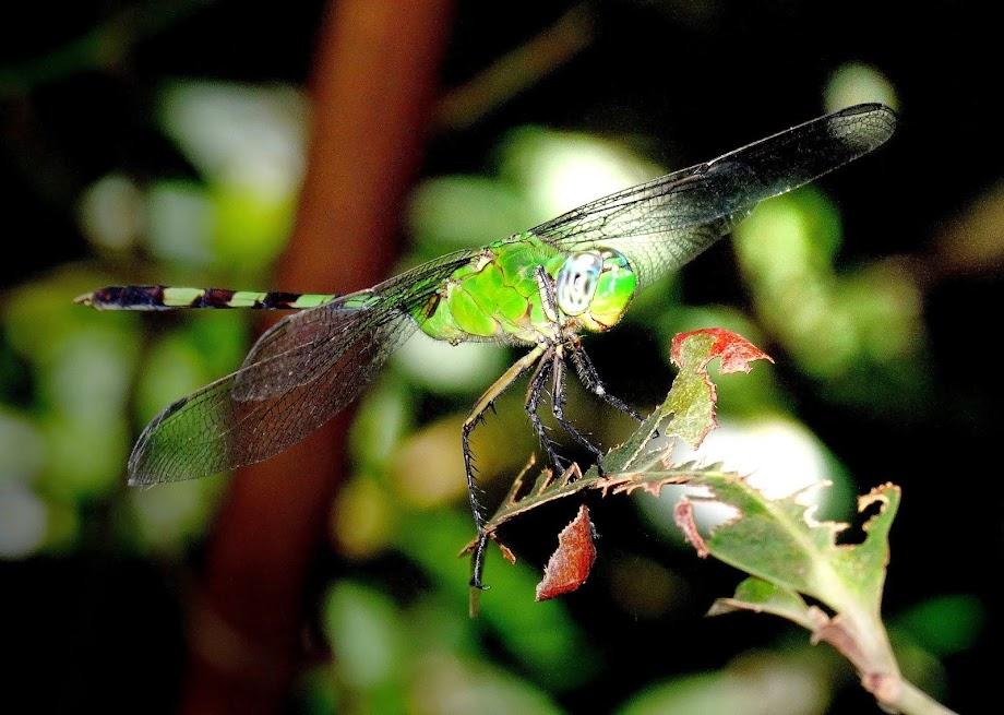 Foto tirada no Bosque da Ciência do INPA, Manaus.
