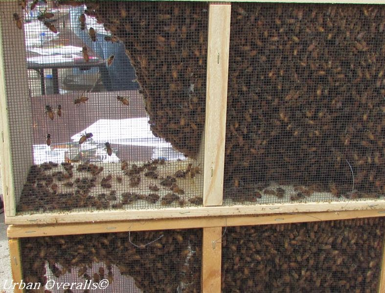Getting Started with Package Bees, shared by Urban Overalls