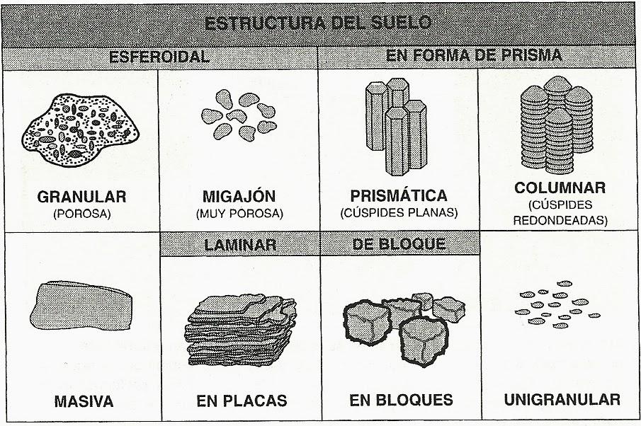 Principales factores que afectan la absorci n de for Partes del suelo
