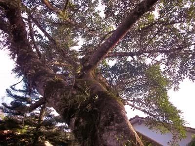 raiz, folhas, árvores