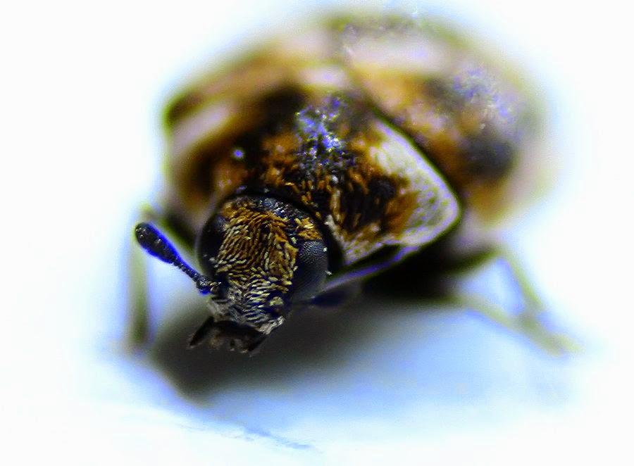 zdjęcie makro insekta