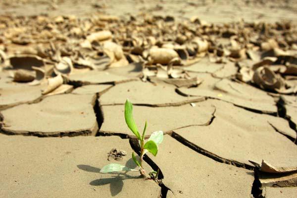 Que fue lo que me quedó de ti? Muchos+lugares+de+la+tierra+est%25C3%25A1n+sufriendo+por+el+calentamiento+global.expand