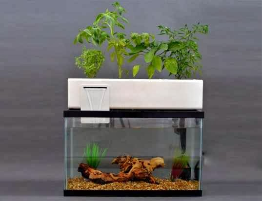 Aquaponics tips and info for you for Fish and plants in aquaponics