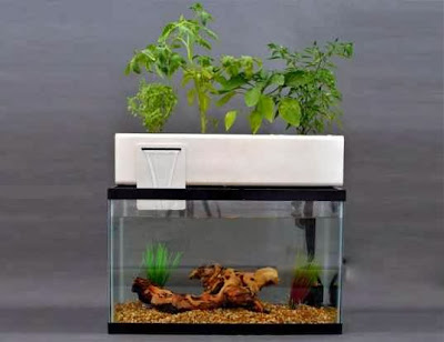 Patrick aquaponic nutrients for Growing plants with fish