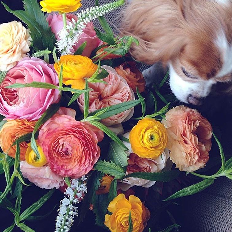 style saint dog mascot king charles spaniel flowers bouquet peonies