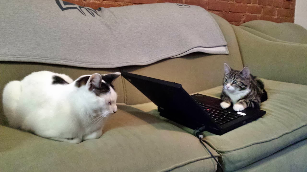 Funny cats - part 87 (40 pics + 10 gifs), cat sits on couch and a kitten using laptop