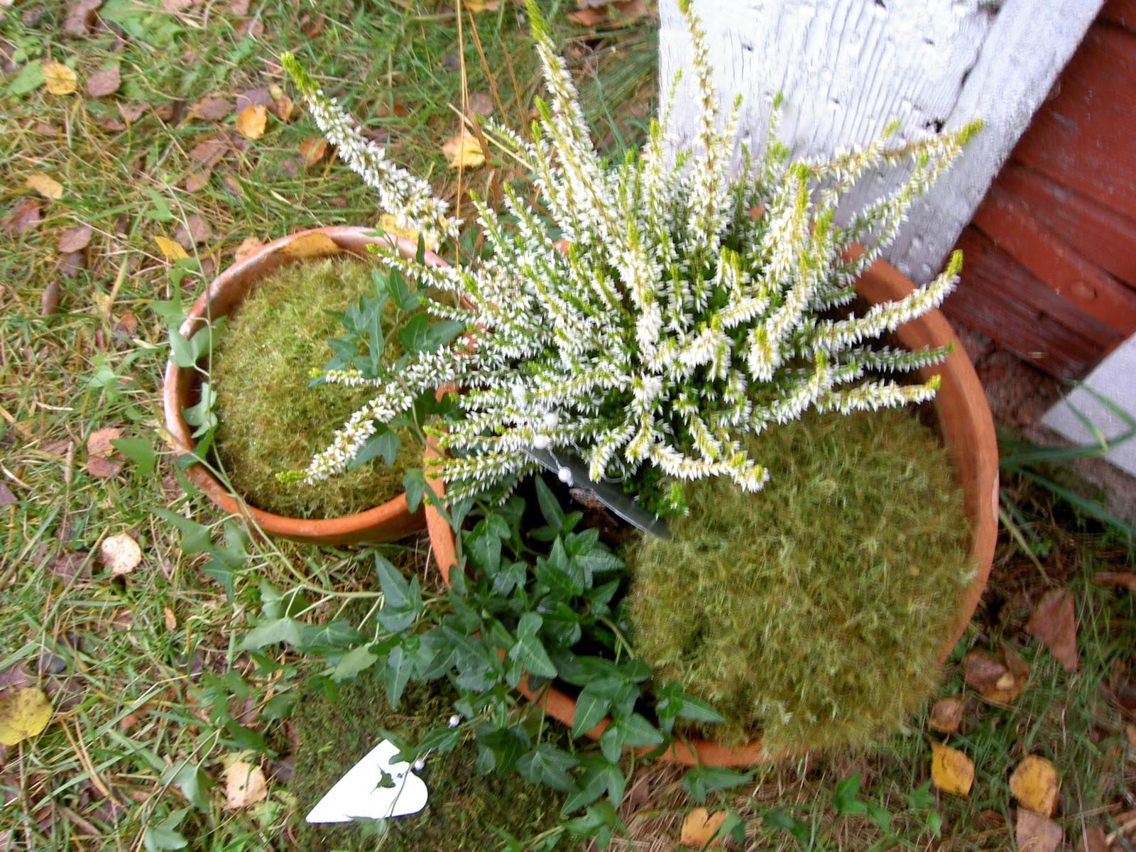 Spira trädgårdsdesign: november 2011