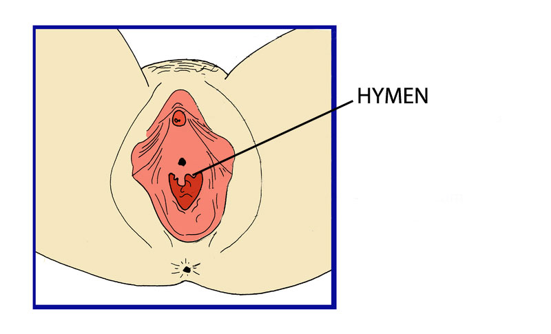 Where is the hymen located