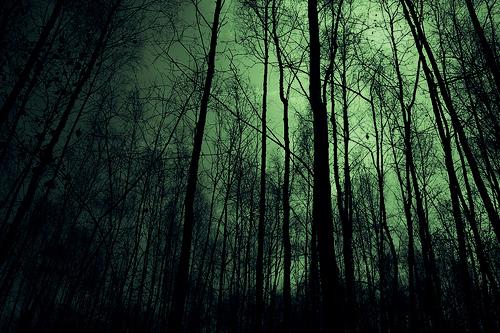 http://3.bp.blogspot.com/-IBTPtgv_XgE/TlgdwABKjhI/AAAAAAAAAcE/0EW_LHVeSVk/s1600/dark-forest-night-image-31001_large.jpg