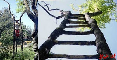 مجموعة من أغرب الاشجار حول العالم tree_3.jpg