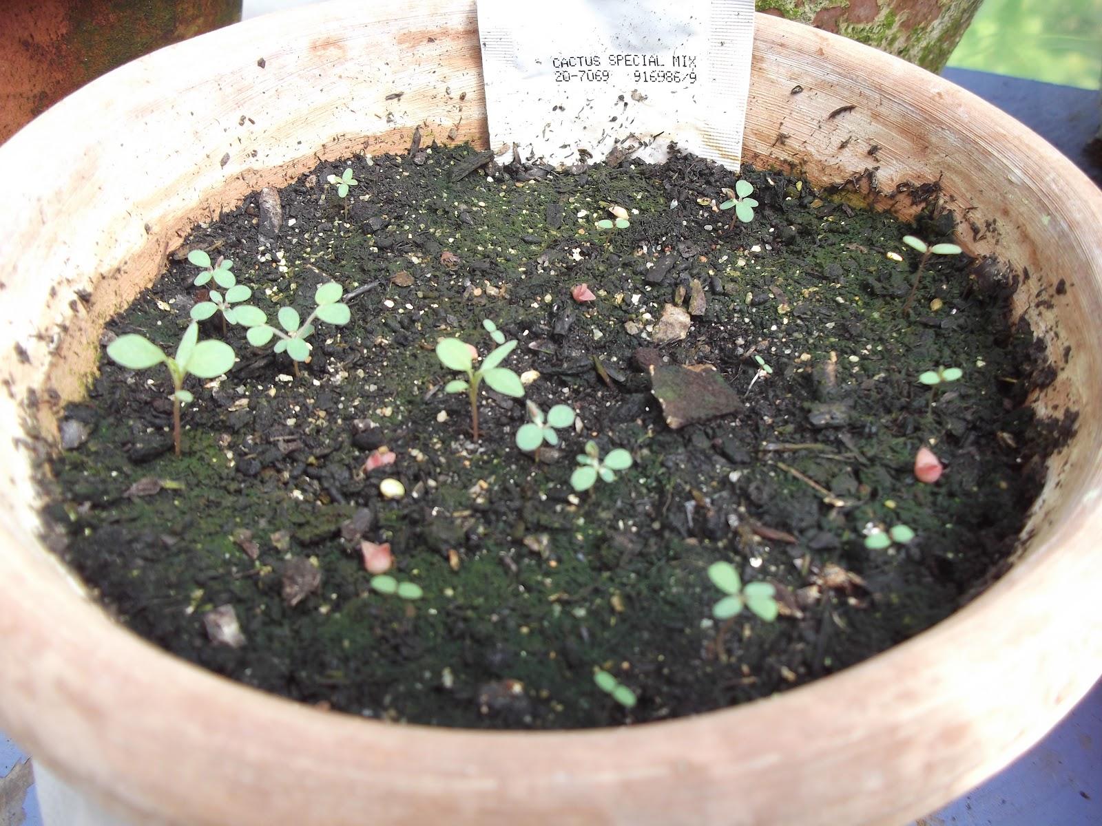 Un blog sur les plantes en tout genre semi d 39 un for Tous les plantes