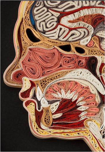 La anatomía es bella