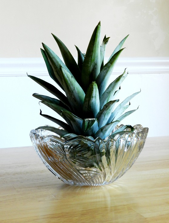 Grow creative blog what to do with a pineapple top for How do i plant a pineapple top