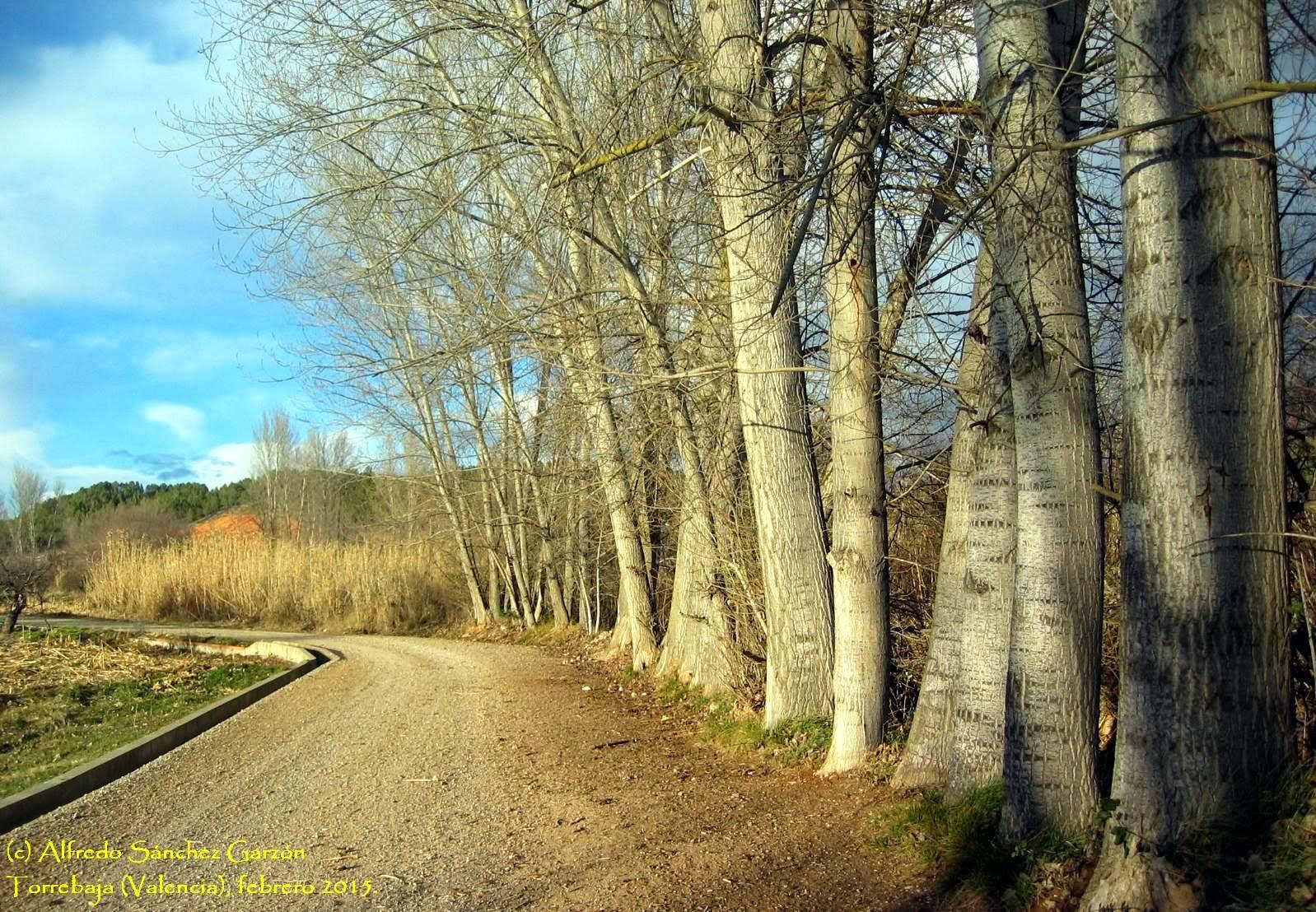 torrebaja-valencia-camino-chopos