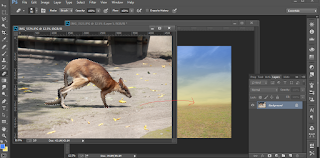 Edit Foto dengan Photoshop Membuat Digital Imaging Hewan