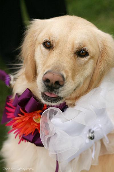 perro vestido para boda
