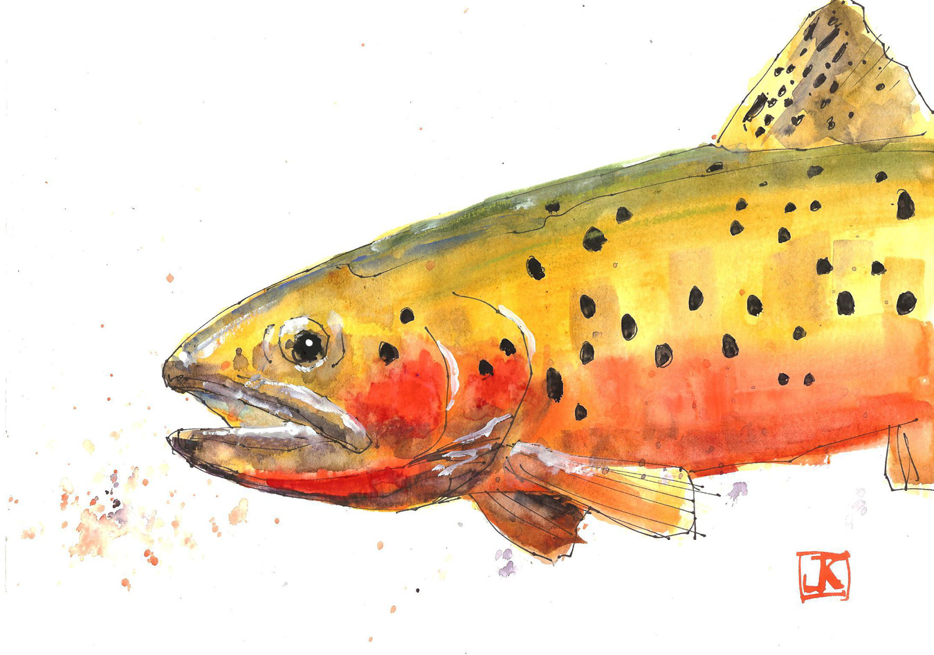 Green Cutthroat Trout Green Back Cutthroat Trout
