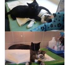 Die Katze mit der grössten Sozialkompetenz