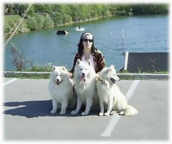 White Siberian Samoyeds