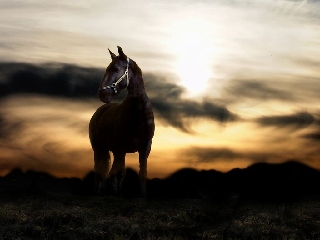 Wonderful   Wallpaper Horse Stunning - black_horse_Wallpaper_Sunset-desktop-background  Perfect Image Reference_813319.jpg