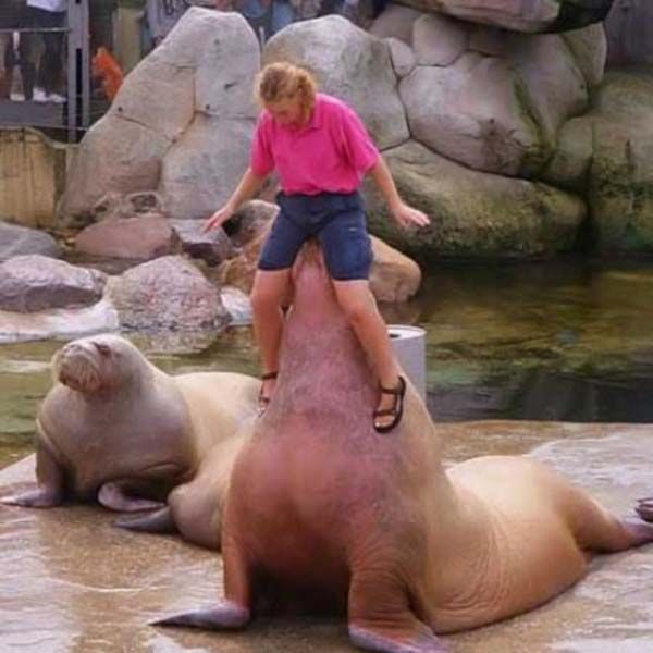 Playing with a walrus
