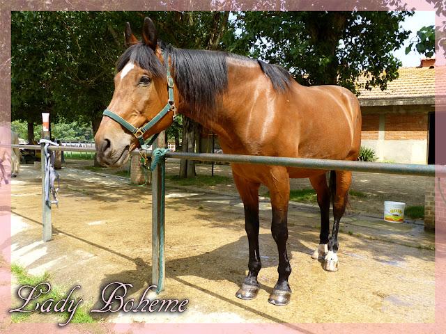 hiperica_lady_boheme_blog_cucina_ricette_gustose_facili_e_veloci_cavallo_di_nome_pegaso_pegaso4+copia.jpg