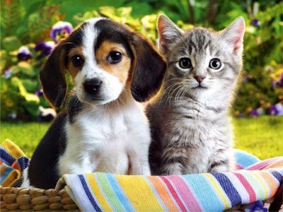 1O VIDEOS CATS & DOGS