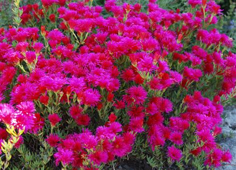 Flores todo el a o for Plantas de todo el ano