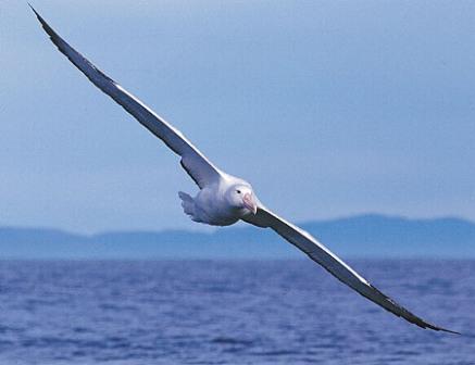 burung burung laut korea