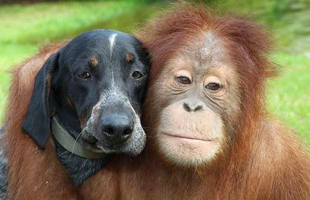Historias de animales que te emocionarán